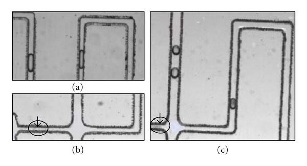 458158.fig.004