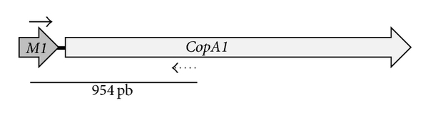 289236.fig.007a
