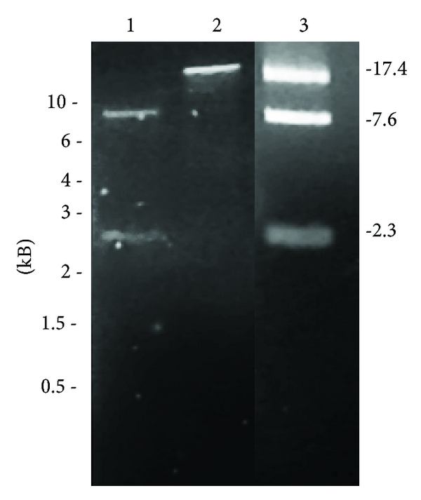 456318.fig.005