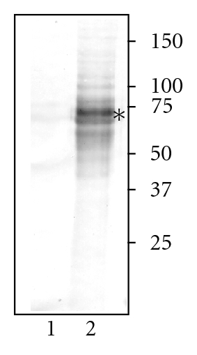 535206.fig.001a