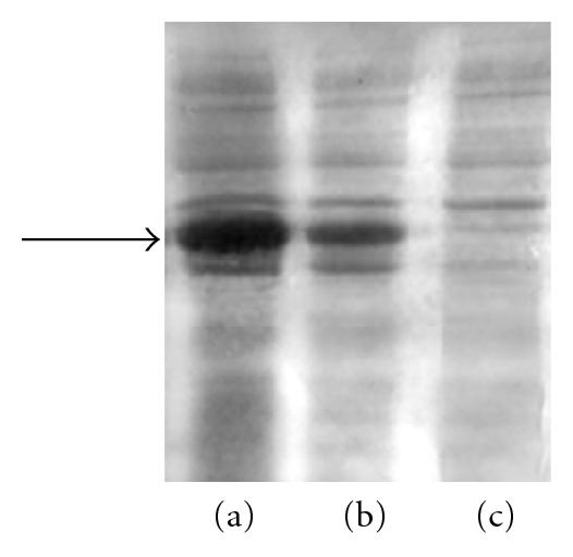 323152.fig.002