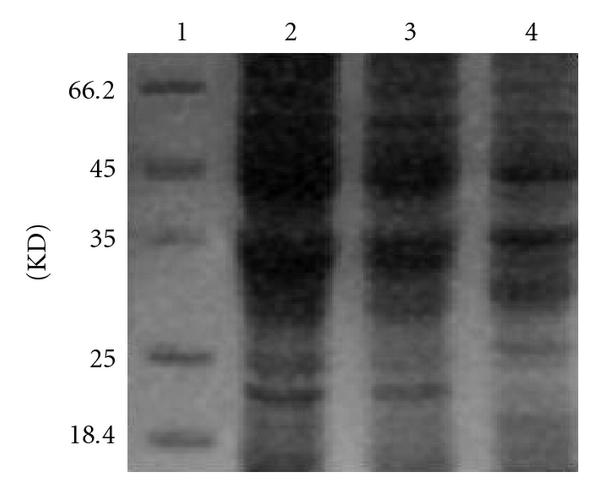 736060.fig.004a