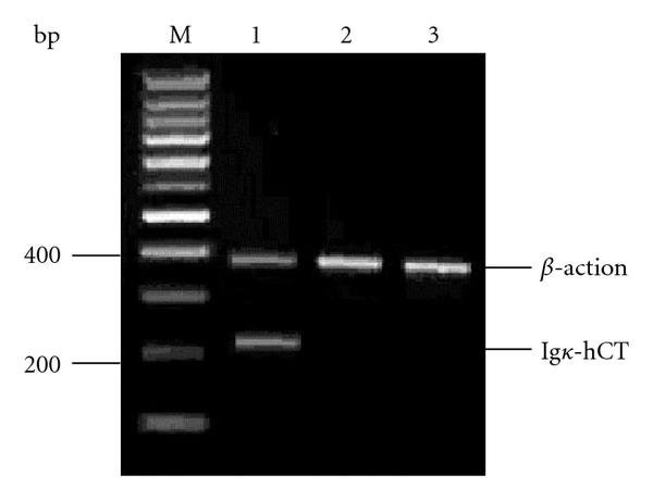 241390.fig.002a