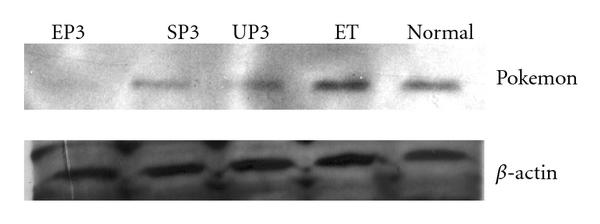 514287.fig.004