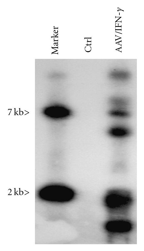 270985.fig.002a