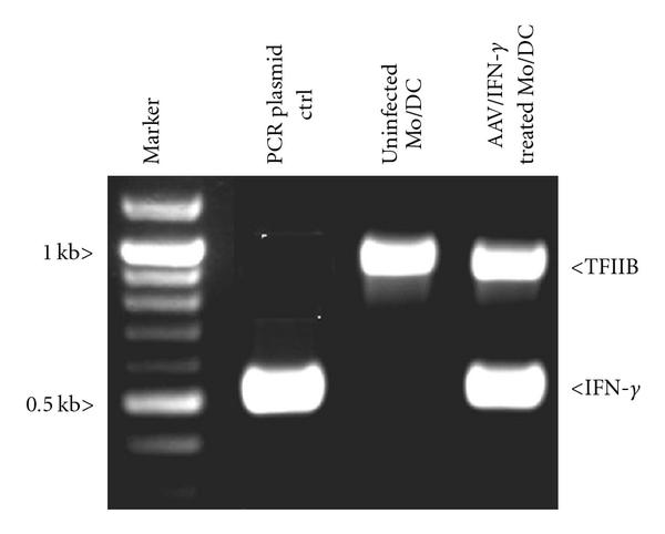 270985.fig.003a