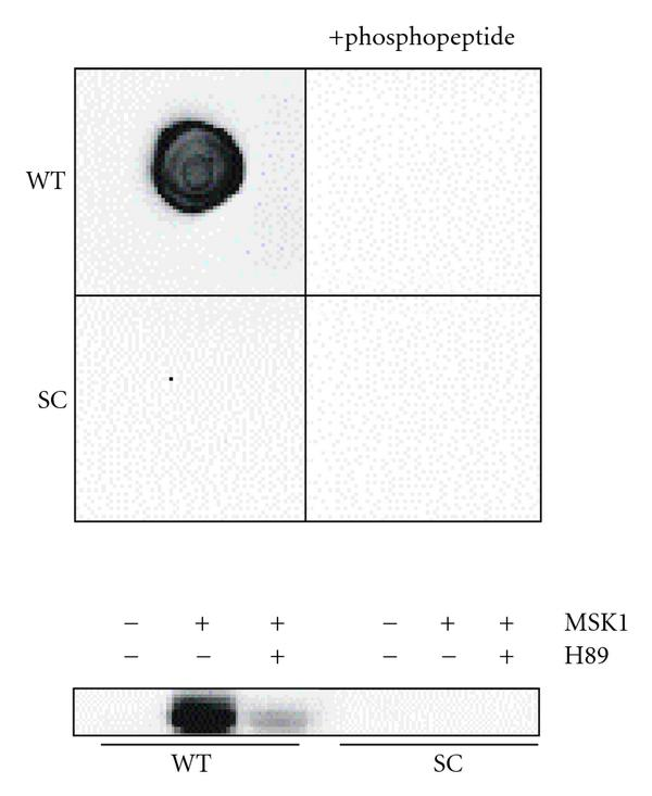 275892.fig.006