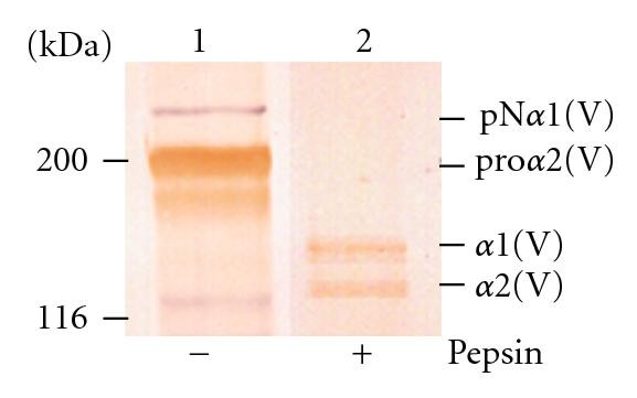 376927.fig.004a