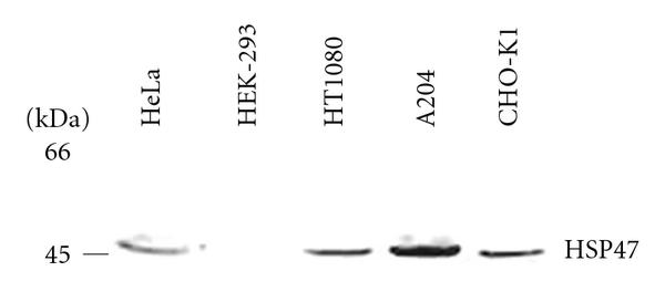 376927.fig.005a