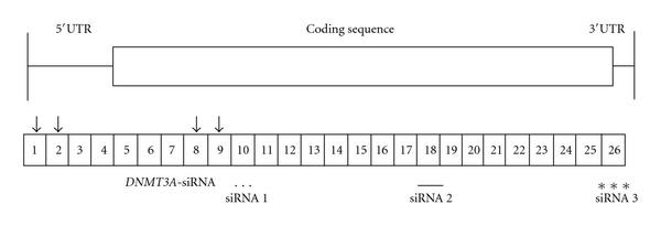 737535.fig.002a