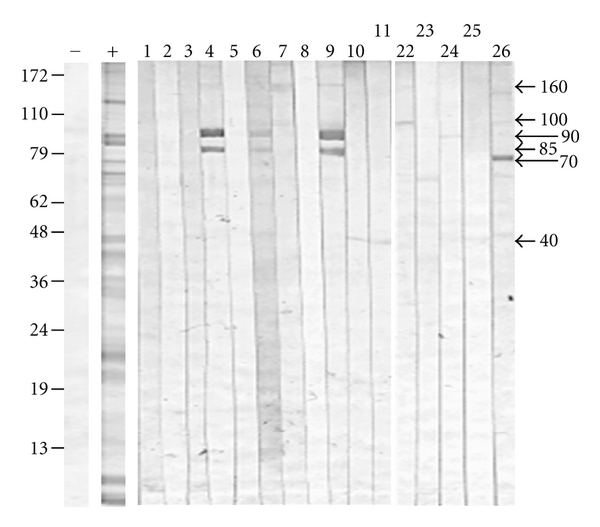 504959.fig.003
