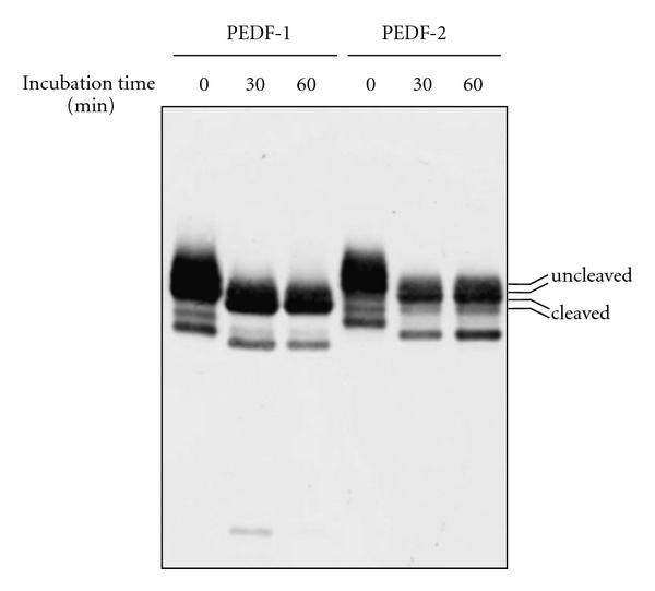 425907.fig.004a