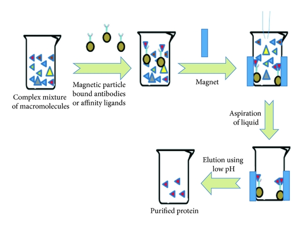 Figure 1 | Preparative Purification of Recombinant Proteins: Current Status  and Future Trends