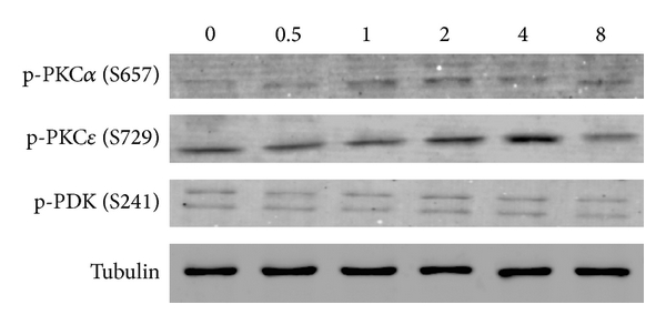 358643.fig.002a