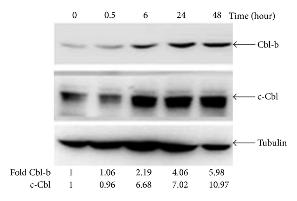 430861.fig.005a