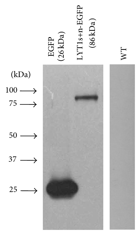 493525.fig.002a