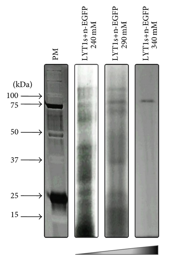 493525.fig.004