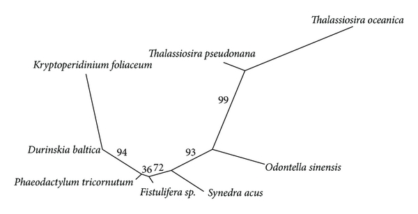 (e) Phylogenetic tree built by MGR package