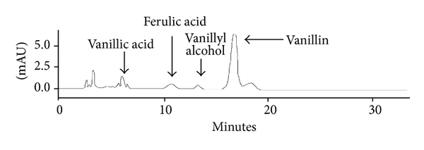 (c) Metabolites obtained after 16 h