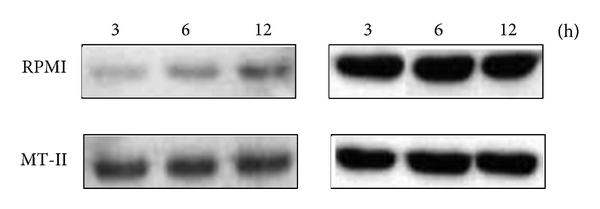 807982.fig.006a