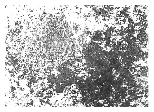 913646.fig.002a