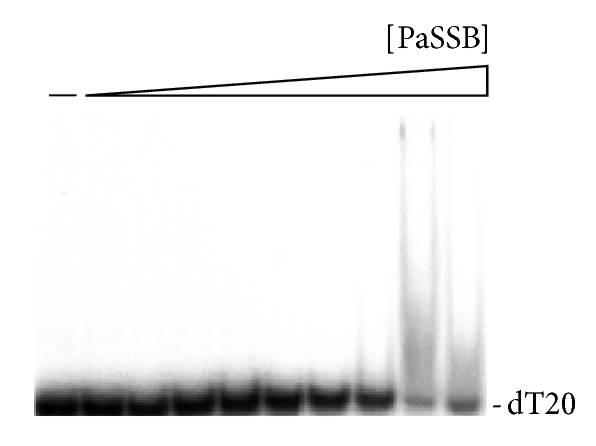 573936.fig.006a