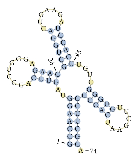 (c) Predicted structure by GM