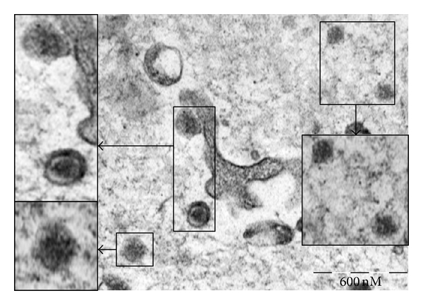 698609.fig.006a