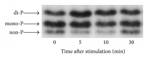 836397.fig.005a