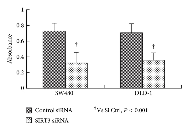 (a) Cell proliferation rates indicated by A562 absorbance