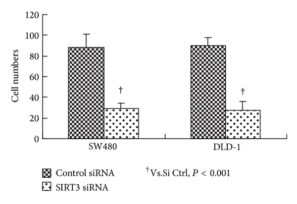 (b) Migration ability of SW480 and DLD-1 cells