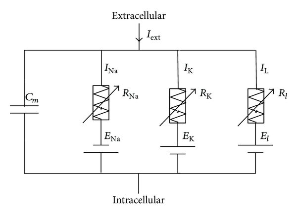 (b) Electrical equivalent circuit of HH model