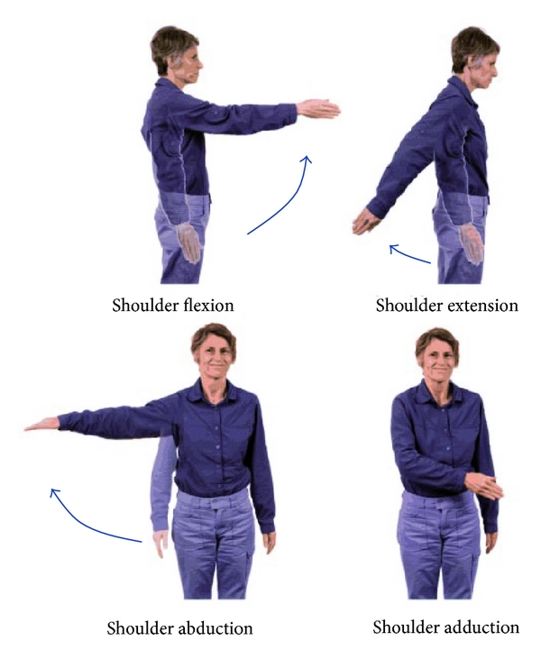 (a) Anatomical movements of the shoulder