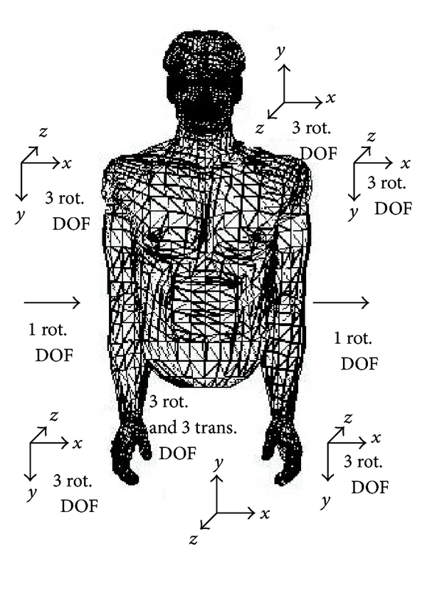 (b) Model of the human body