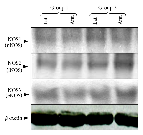 783287.fig.001a