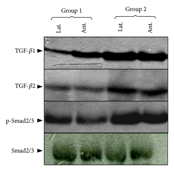 783287.fig.002a