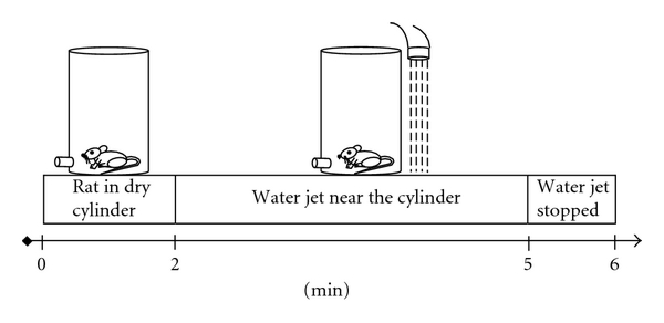 (a) Habituation session  in perforated cylinder