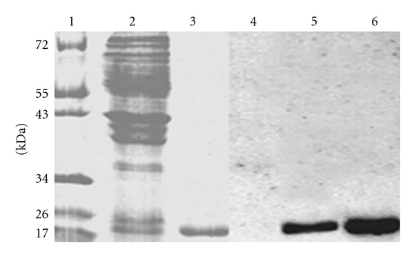 751452.fig.002