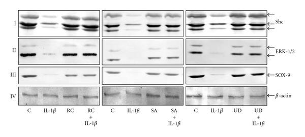 509383.fig.005