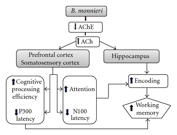 606424.fig.005