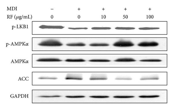475386.fig.005a