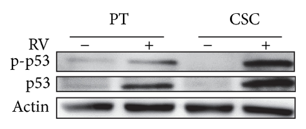 590393.fig.005a