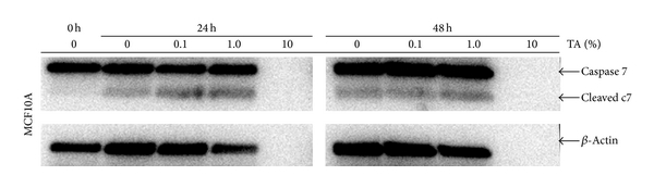 369609.fig.006a