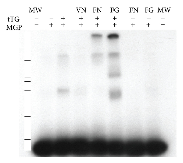 807013.fig.002a