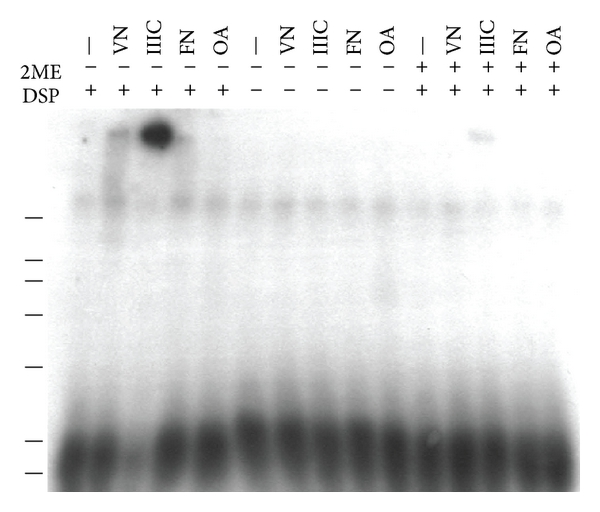 807013.fig.003a