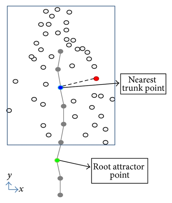 (a) Flow direction depends on root attractor and nearest trunk point positions