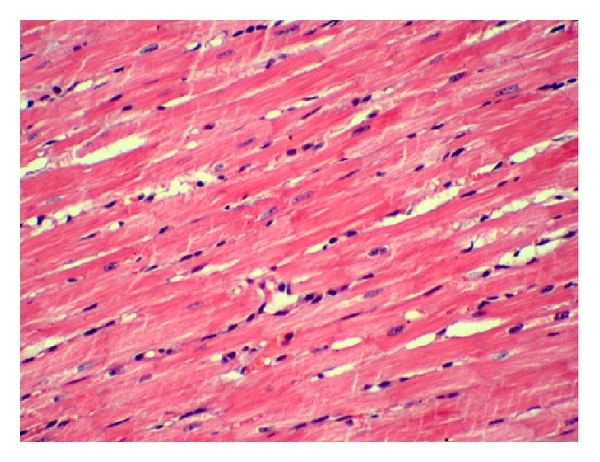 (c) BPS group of H&E staining 200