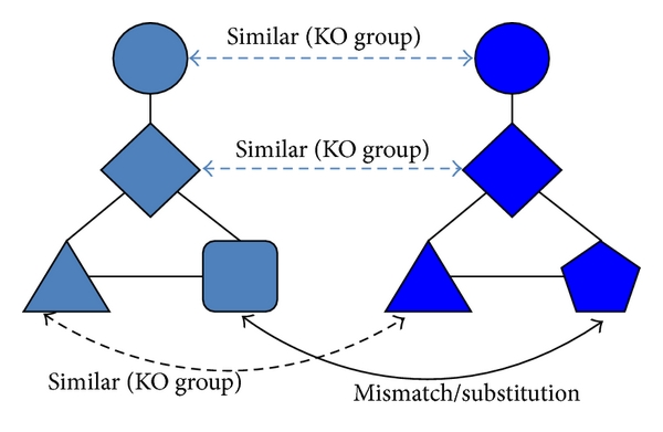 (a) Align species A and species B using KO group