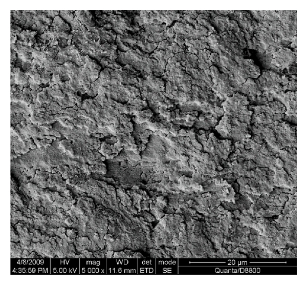 (c) Polished surface (50mm/s)