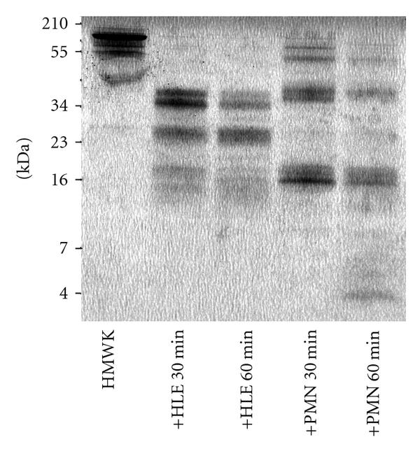 761037.fig.001a